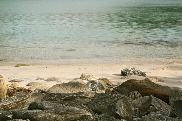 Sommarøya aug. 2009 057